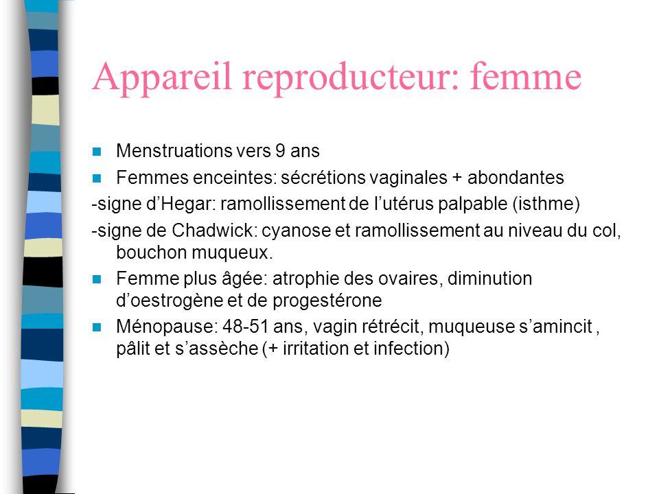 Appareil reproducteur: femme