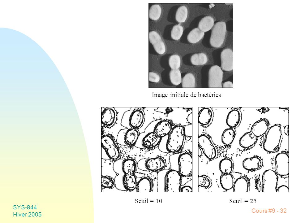 Image initiale de bactéries