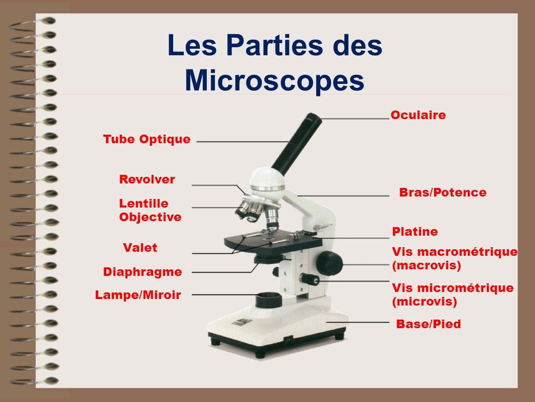 Les Parties des Microscopes