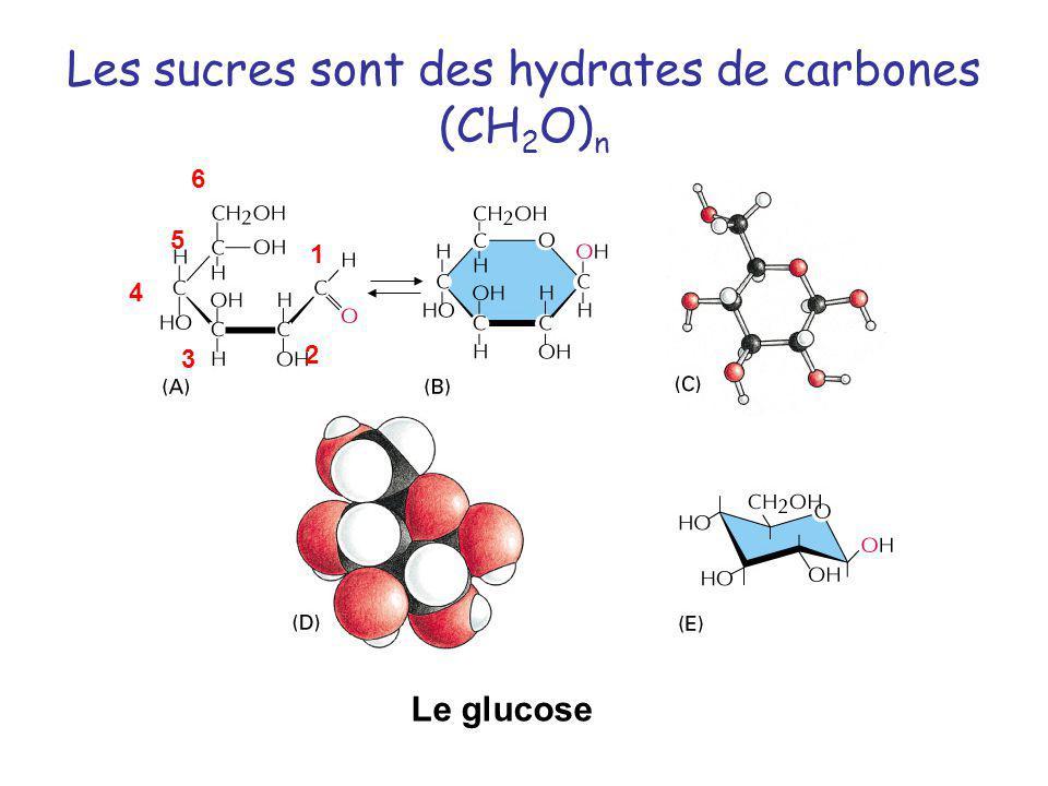 Les sucres sont des hydrates de carbones (CH2O)n