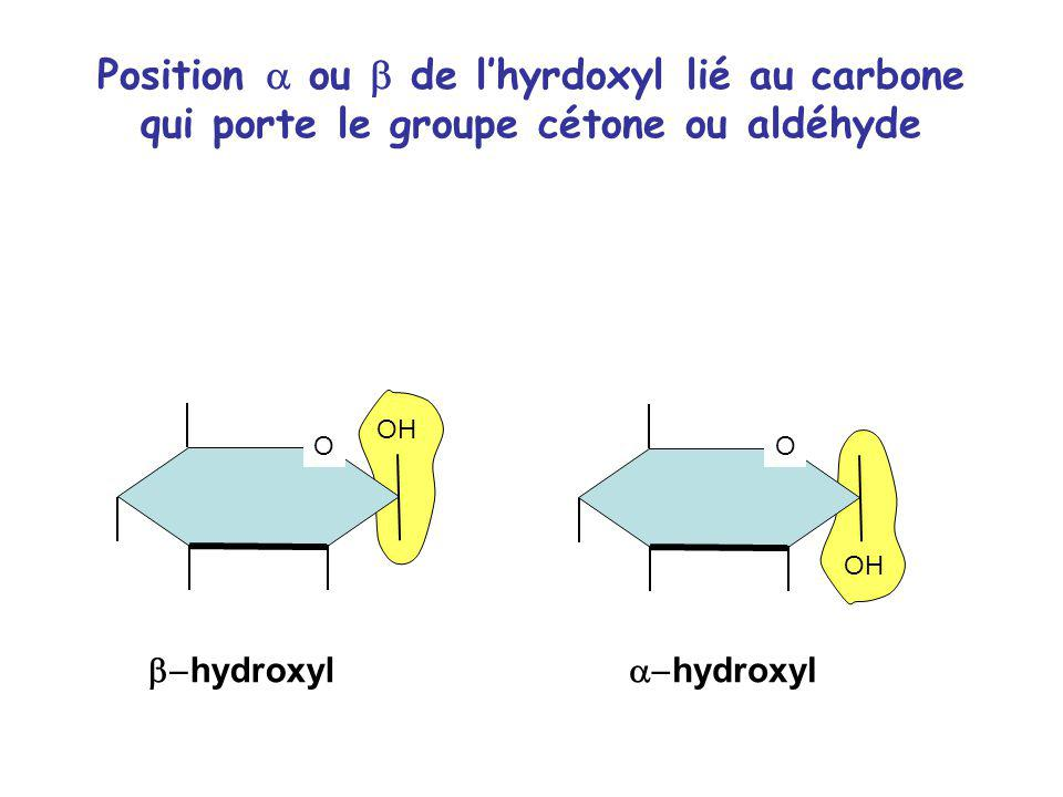 Position a ou b de l'hyrdoxyl lié au carbone qui porte le groupe cétone ou aldéhyde