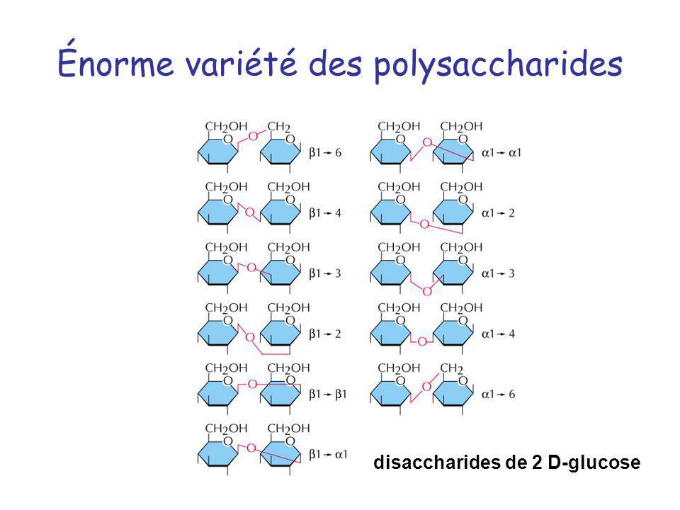 Énorme variété des polysaccharides