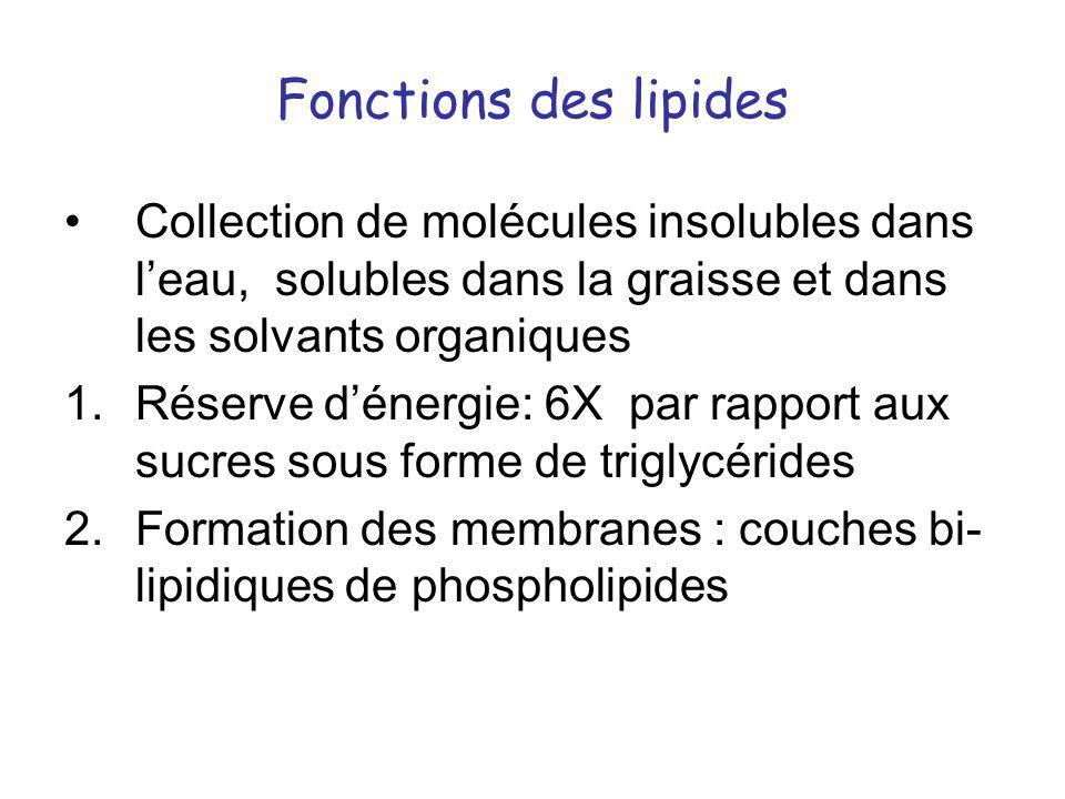 Fonctions des lipides Collection de molécules insolubles dans l'eau, solubles dans la graisse et dans les solvants organiques.