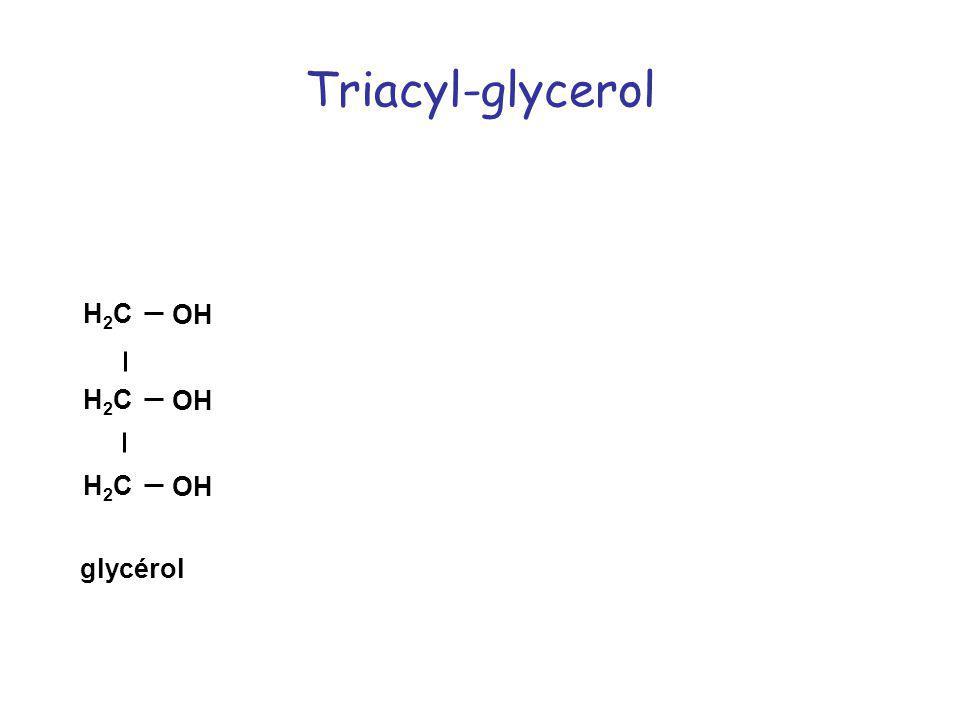 Triacyl-glycerol C O C O H2C OH H2C O O C glycérol triacylglycerol