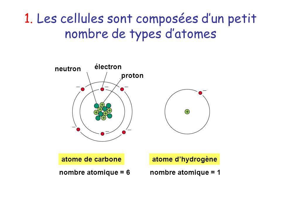 1. Les cellules sont composées d'un petit nombre de types d'atomes