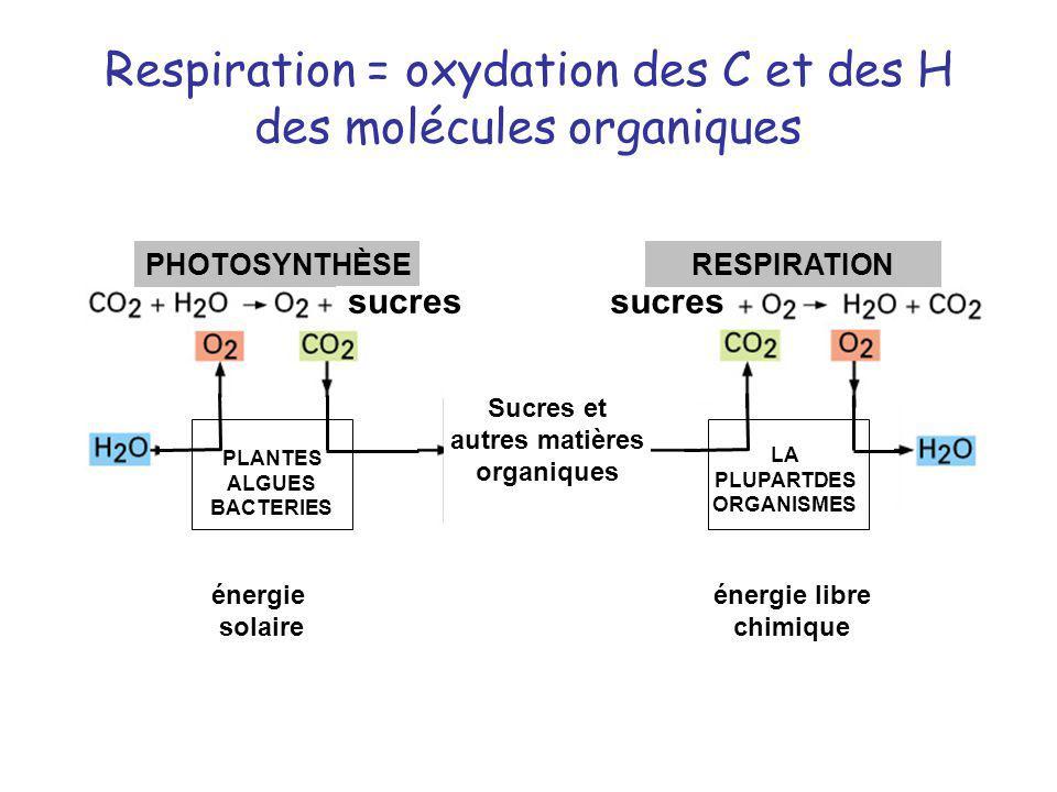 Respiration = oxydation des C et des H des molécules organiques