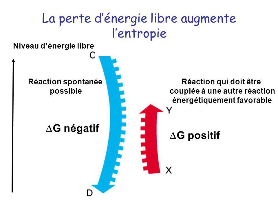 La perte d'énergie libre augmente l'entropie