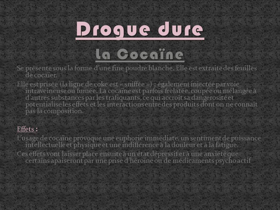 Drogue dure La Cocaïne. Se présente sous la forme d'une fine poudre blanche. Elle est extraite des feuilles de cocaïer.