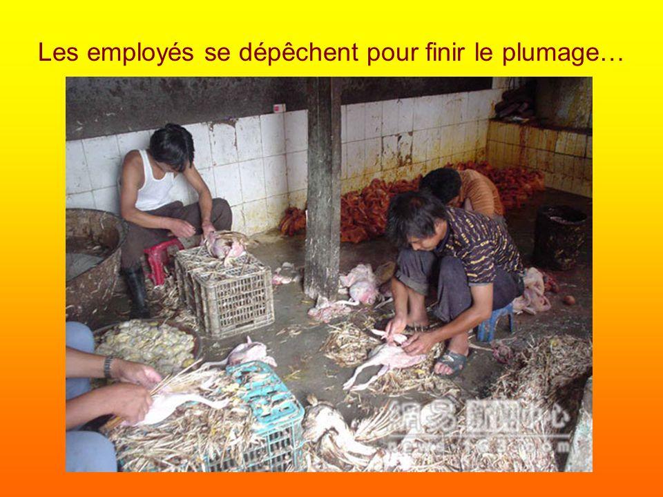 Les employés se dépêchent pour finir le plumage…