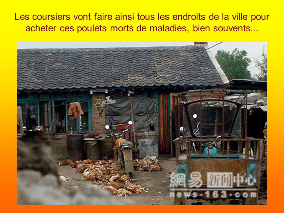 Les coursiers vont faire ainsi tous les endroits de la ville pour acheter ces poulets morts de maladies, bien souvents...