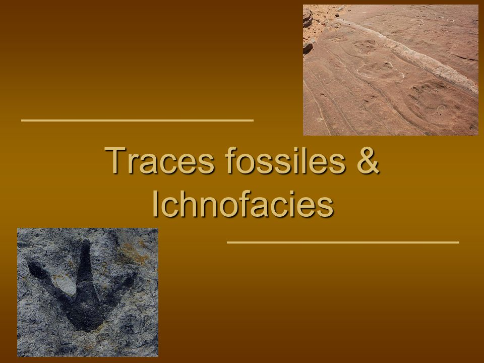Traces fossiles & Ichnofacies