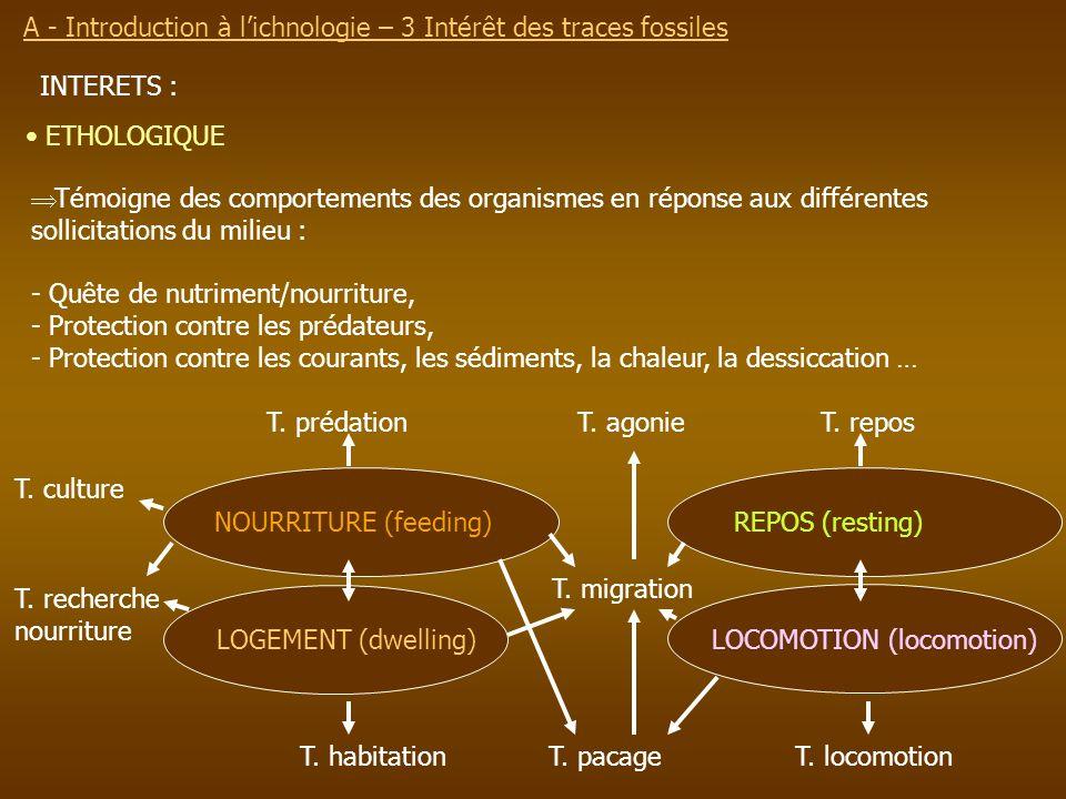 A - Introduction à l'ichnologie – 3 Intérêt des traces fossiles