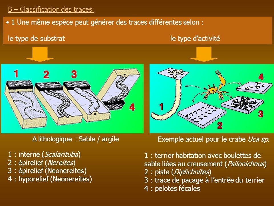B – Classification des traces