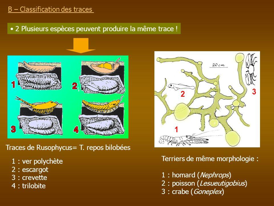 3 2 1 B – Classification des traces