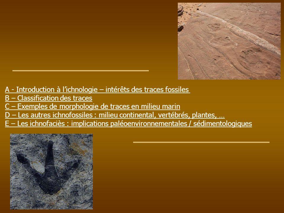 A - Introduction à l'ichnologie – intérêts des traces fossiles