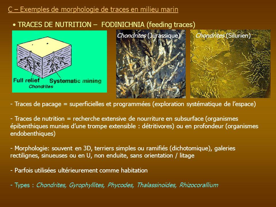 C – Exemples de morphologie de traces en milieu marin