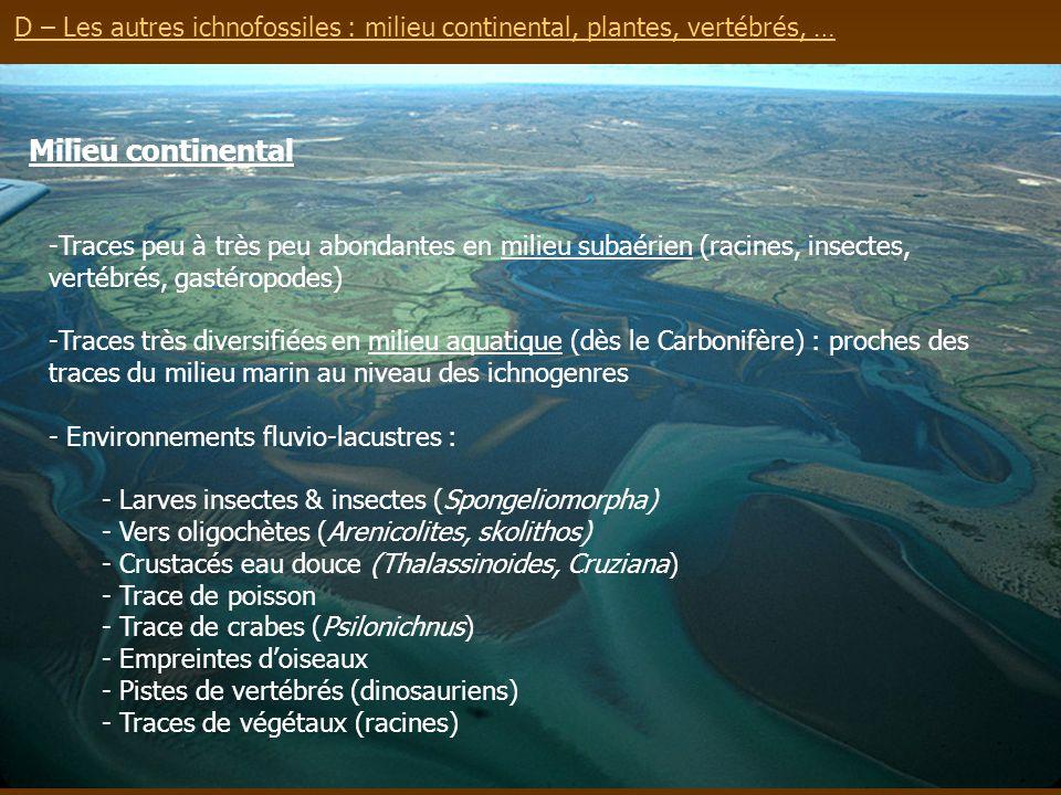 D – Les autres ichnofossiles : milieu continental, plantes, vertébrés, …