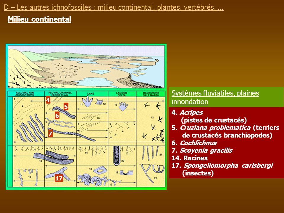 Systèmes fluviatiles, plaines innondation