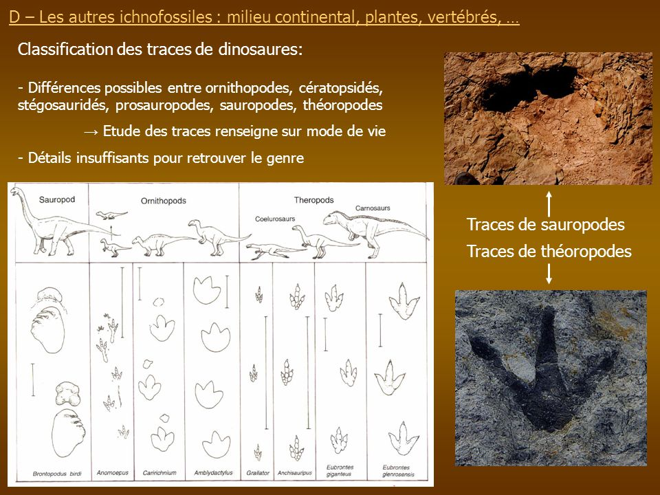 Classification des traces de dinosaures: