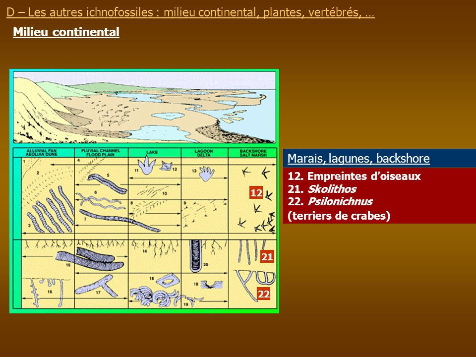 Marais, lagunes, backshore