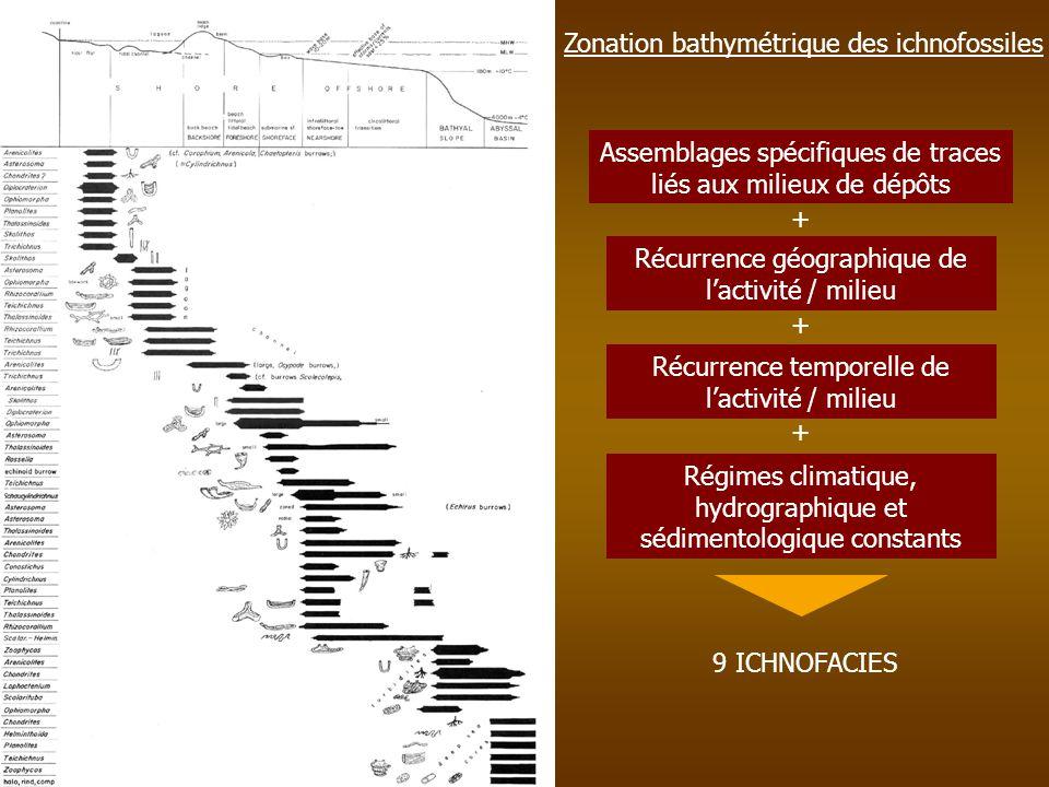 Zonation bathymétrique des ichnofossiles