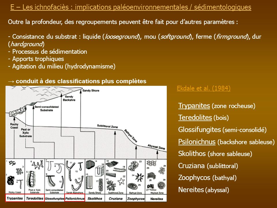 Trypanites (zone rocheuse) Teredolites (bois)