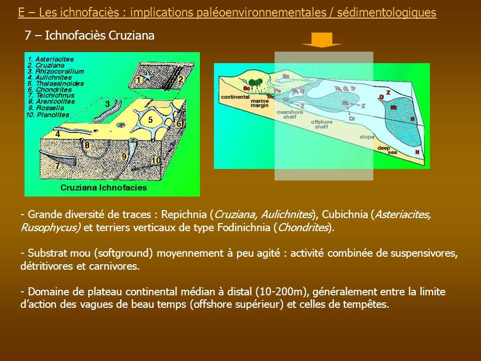 7 – Ichnofaciès Cruziana