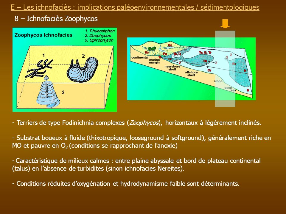 8 – Ichnofaciès Zoophycos