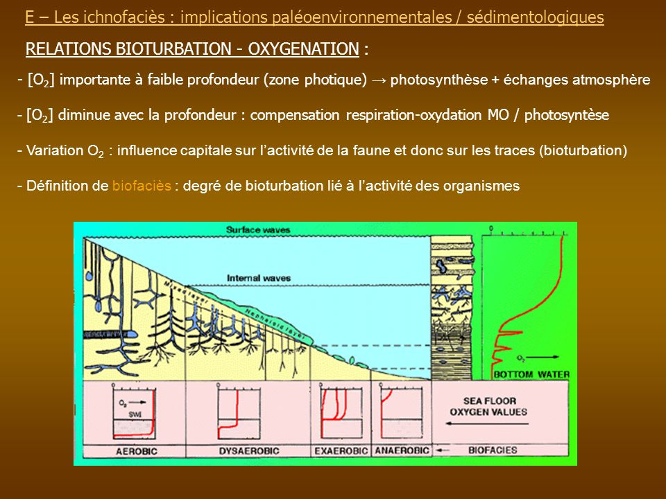 RELATIONS BIOTURBATION - OXYGENATION :