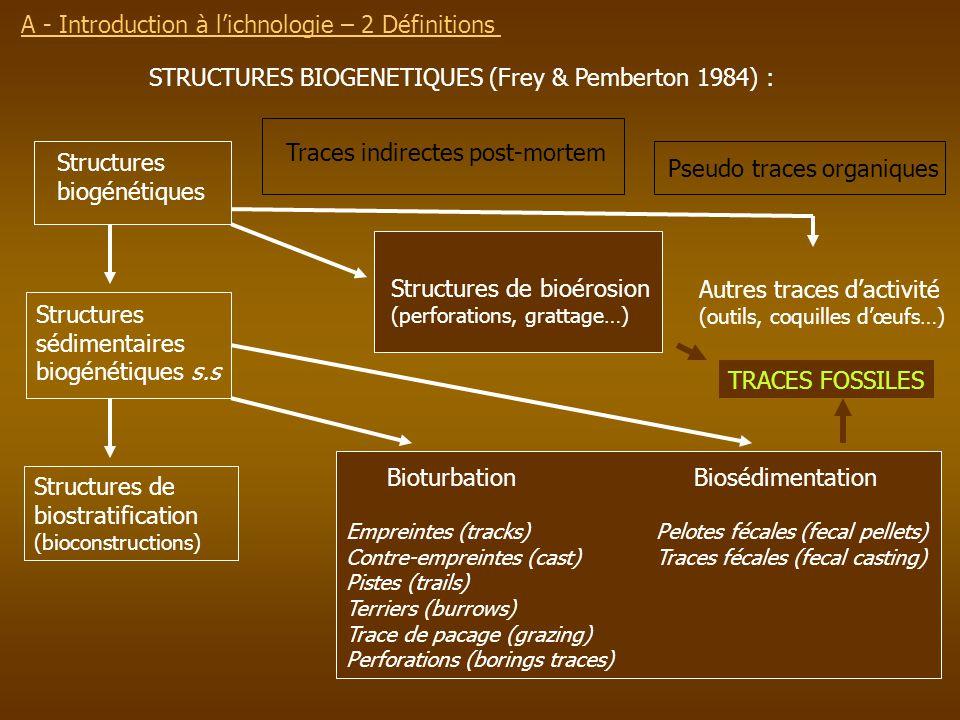 A - Introduction à l'ichnologie – 2 Définitions