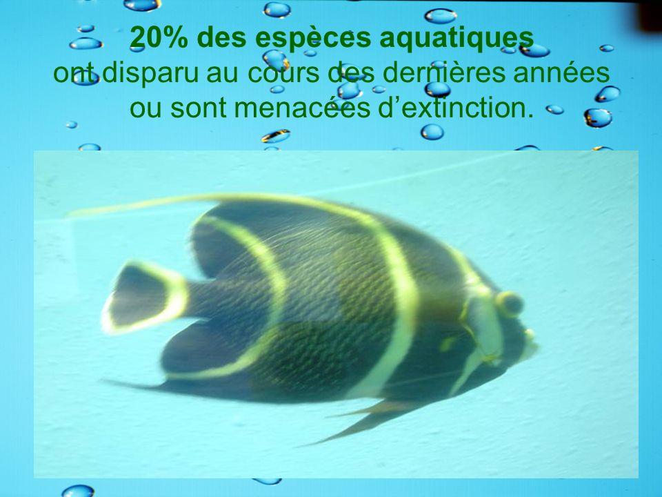 20% des espèces aquatiques ont disparu au cours des dernières années ou sont menacées d'extinction.