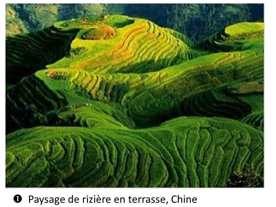  Paysage de rizière en terrasse, Chine
