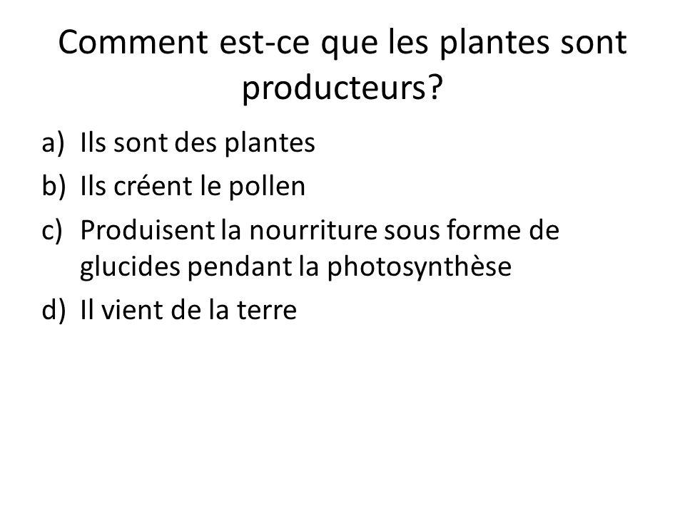 Comment est-ce que les plantes sont producteurs