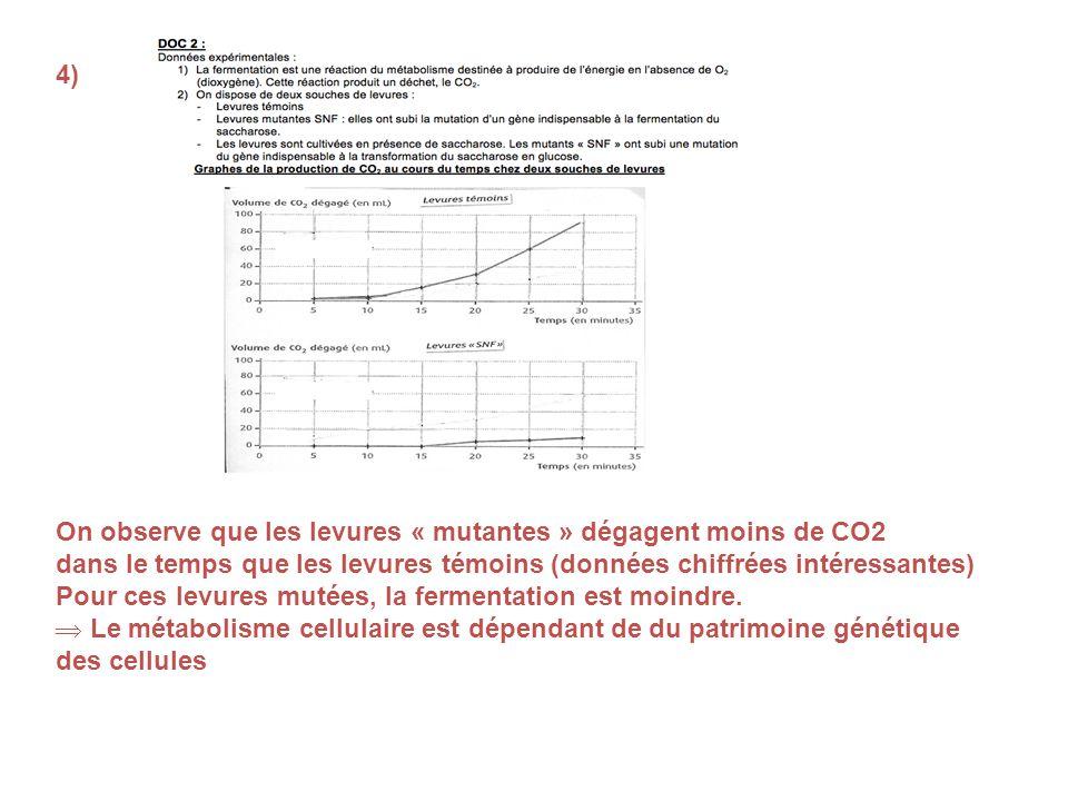 4) On observe que les levures « mutantes » dégagent moins de CO2. dans le temps que les levures témoins (données chiffrées intéressantes)