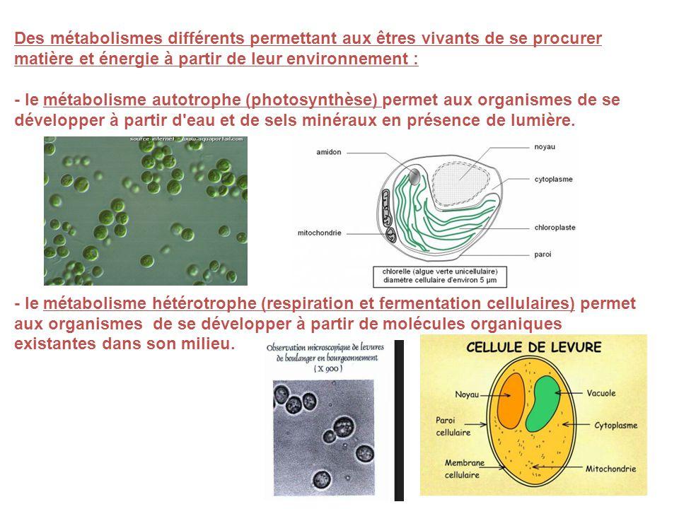 Des métabolismes différents permettant aux êtres vivants de se procurer matière et énergie à partir de leur environnement :
