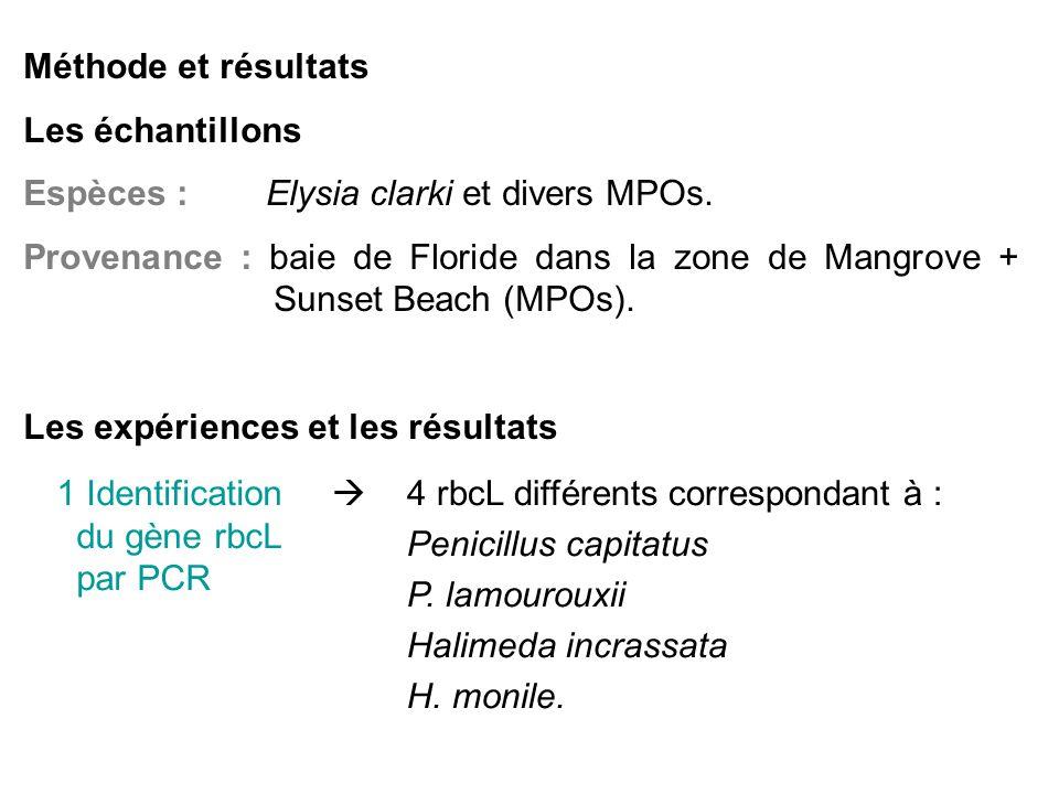 Méthode et résultats Les échantillons. Espèces : Elysia clarki et divers MPOs.