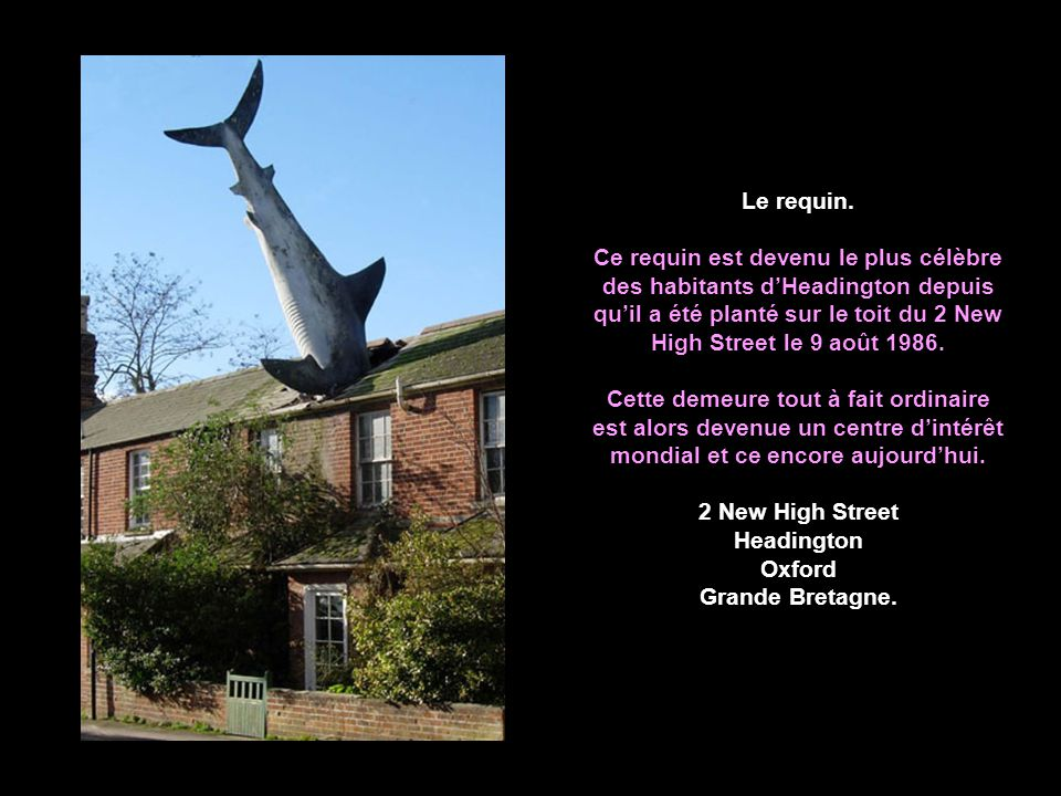 Le requin.