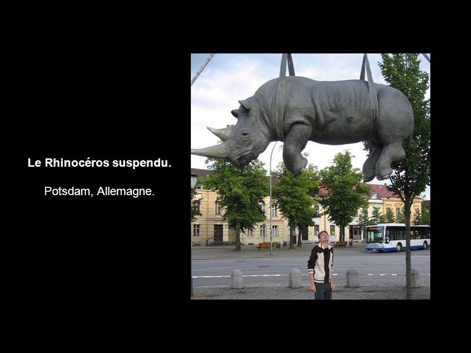 Le Rhinocéros suspendu. Potsdam, Allemagne.