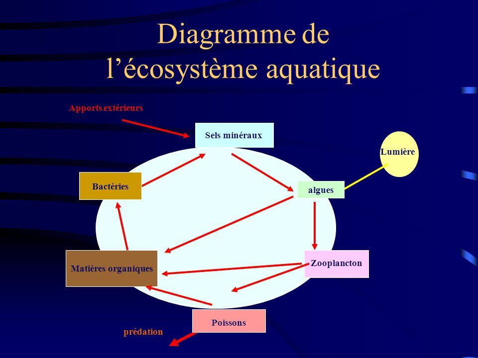 Diagramme de l'écosystème aquatique