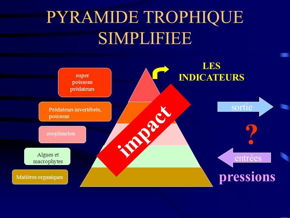 PYRAMIDE TROPHIQUE SIMPLIFIEE