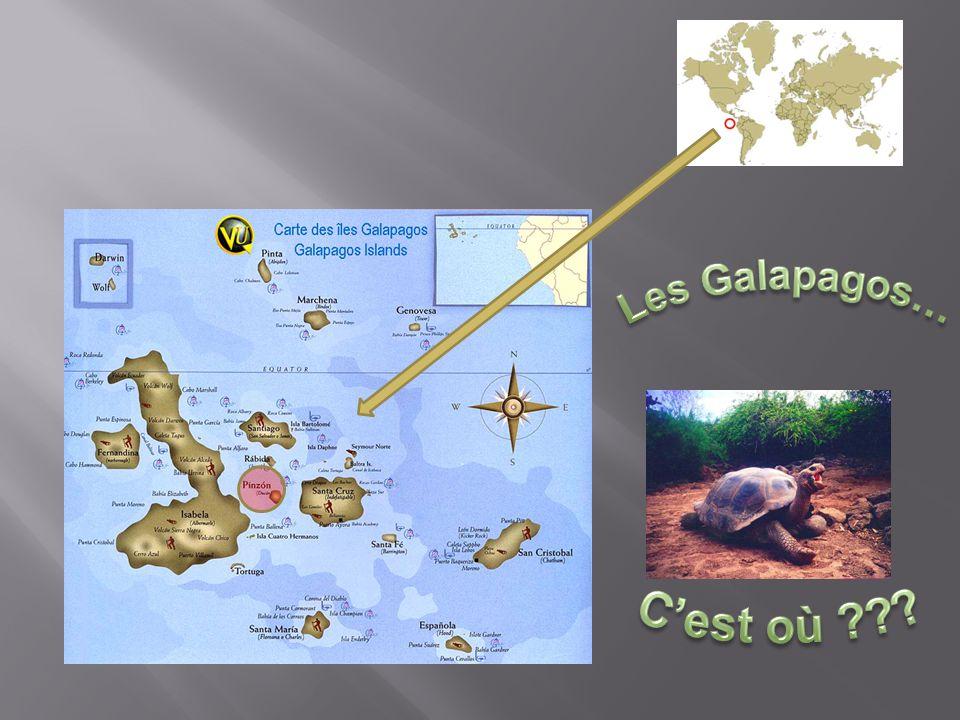 Les Galapagos… C'est où