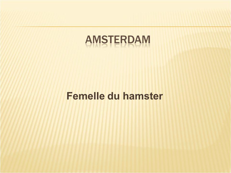Femelle du hamster