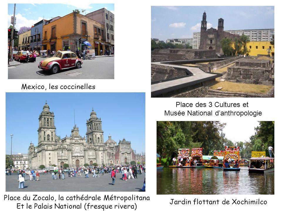 Mexico, les coccinelles