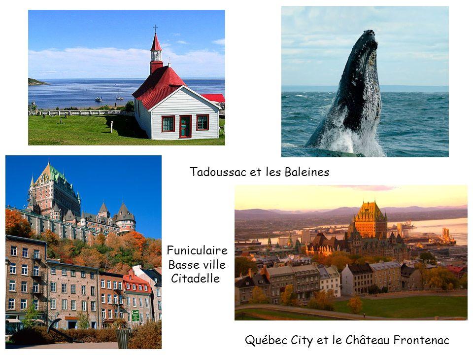 Tadoussac et les Baleines