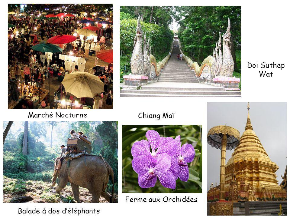 Doi Suthep Wat Marché Nocturne Chiang Maï Ferme aux Orchidées Balade à dos d'éléphants