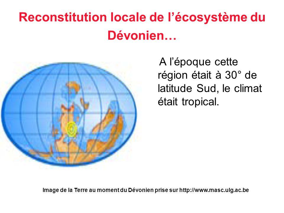 Reconstitution locale de l'écosystème du Dévonien…