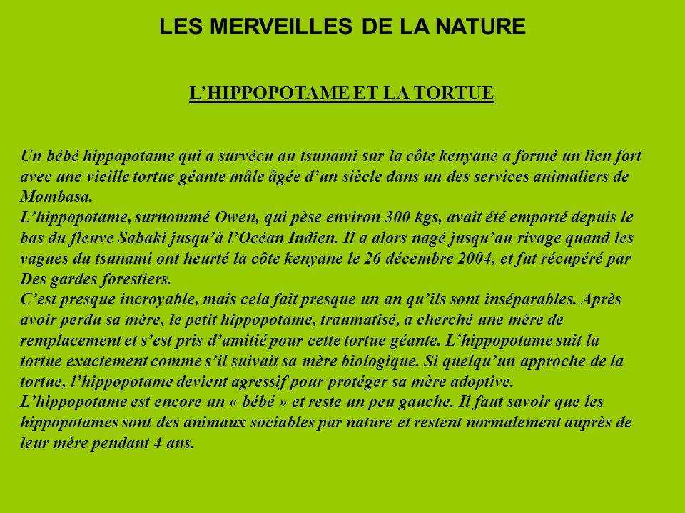LES MERVEILLES DE LA NATURE L'HIPPOPOTAME ET LA TORTUE