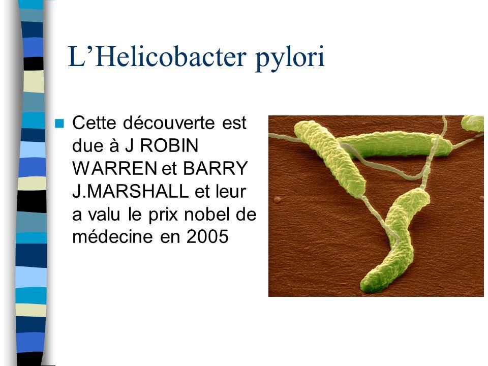 L'Helicobacter pylori