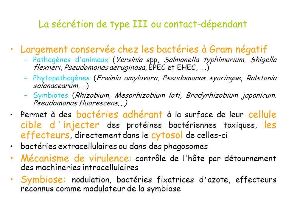 La sécrétion de type III ou contact-dépendant