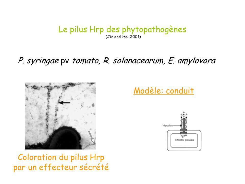 Le pilus Hrp des phytopathogènes (Jin and He, 2001)